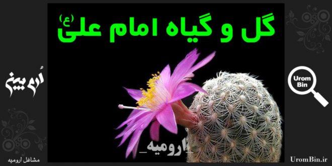 نمایشگاه دائمی گل و گیاه امام علی ع