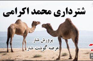 شترداری محمد اکرامی
