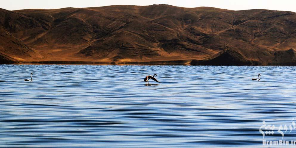 پرندگان-جزیره-کبودان