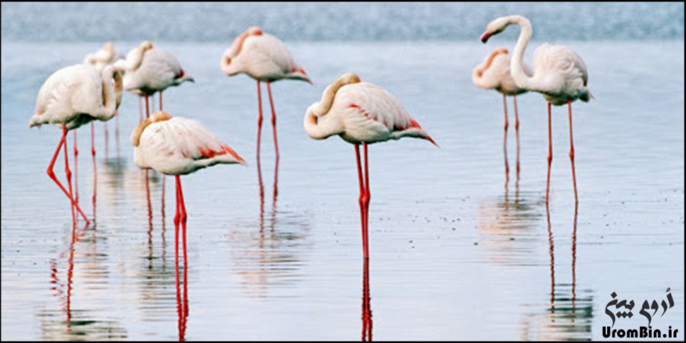 پرندگان-مهاجر-جزیره