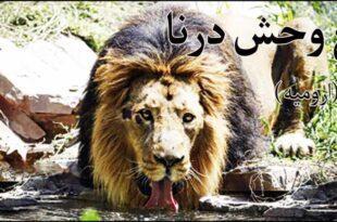 باغ-وحش-درنا