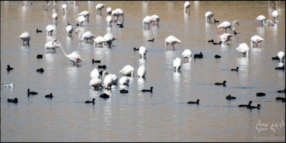 پرندگان-در-تالاب-سولدوز